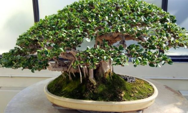 Bonsai Most Profitable Crops to Grow