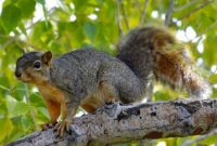 How to Repel Squirrels from Garden