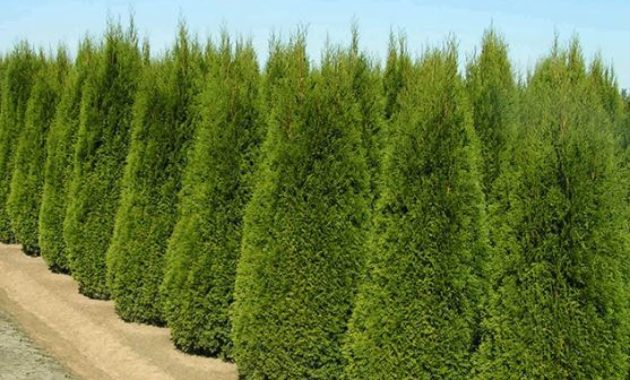 woody ornamental Most Profitable Crops to Grow