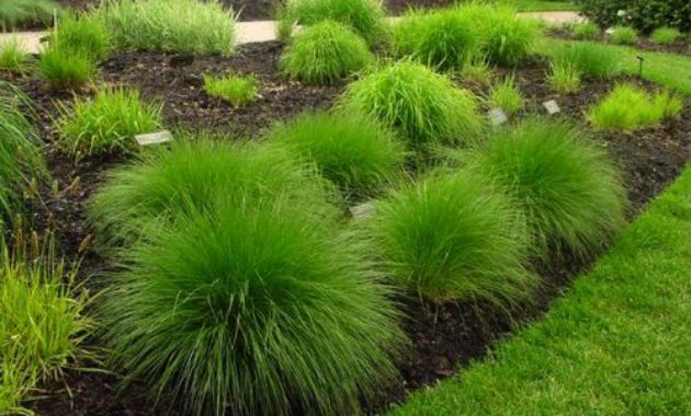 grass that most profitable to plant