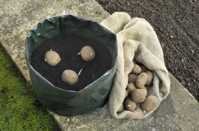 How to Grow Potatoes in a Containers
