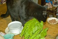 Can Cats Eat Lettuce