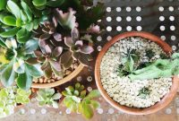How Often Do You Water A Succulent