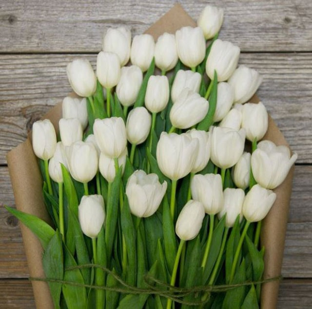 White Tulips, black and white flower