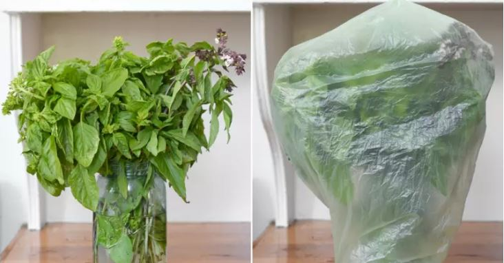 How To Keep Basil Fresh using water on glass