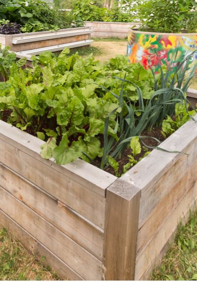 Building Raised Beds from Wood