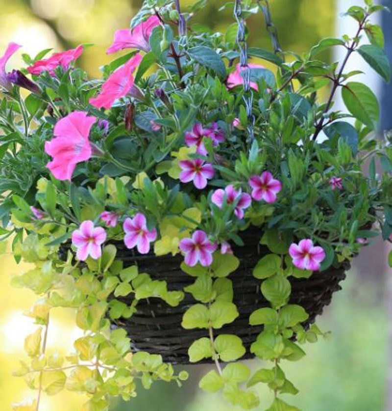 Cheap garden ideas - Hanging basket