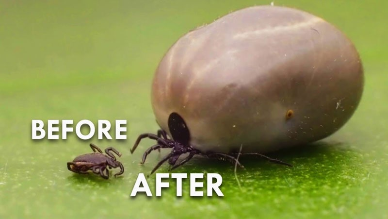 how to identify tick