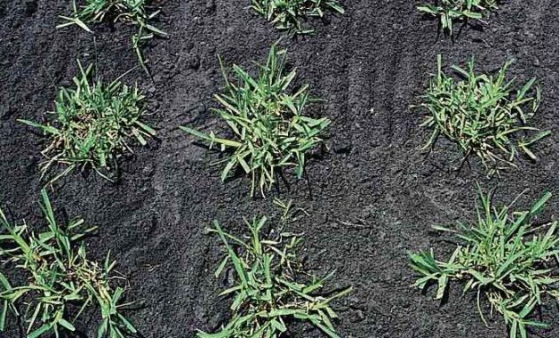 How to Grow Grass Without Seed