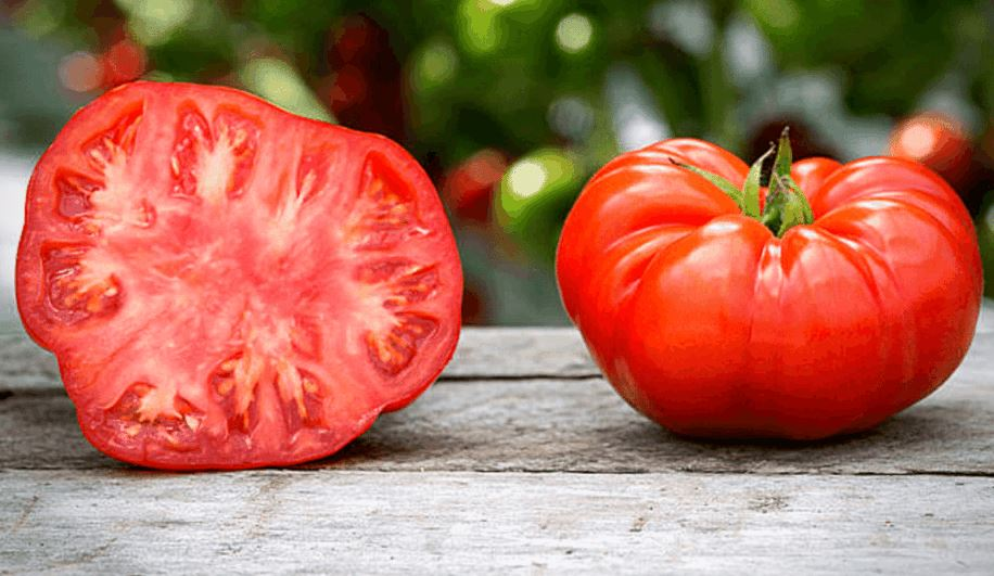 Growing Beefmaster Tomatoes