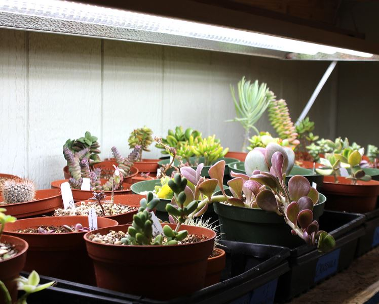 Choosing Succulent Grow Light