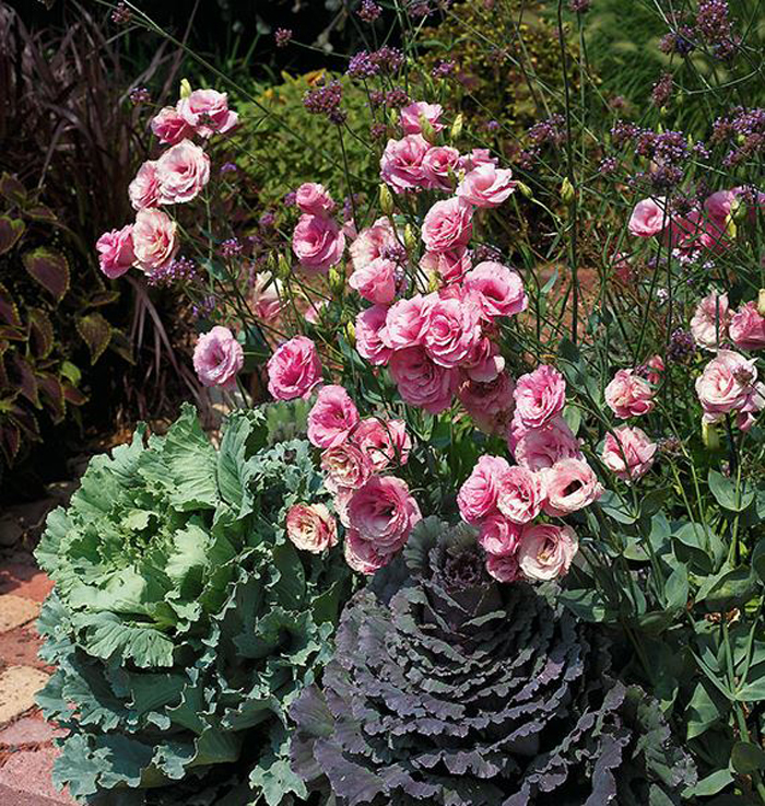 How to Grow Lisianthus