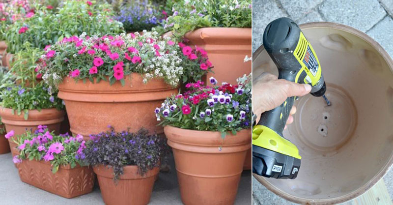 Grow Flowers In Pots Without Drainage Holes