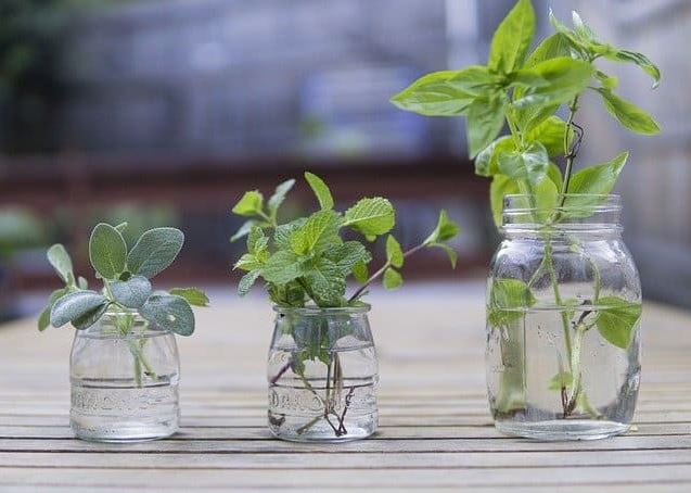 Herbs that grow in water